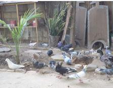 Scène «promenade romantique des oiseaux» chez Bruce